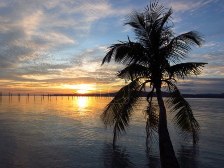 Palm, tropical beach and sea