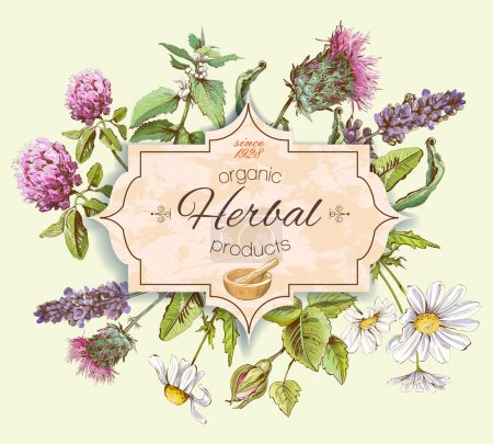 Illustration for Vector vintage banner with wild flowers and medicinal herbs. Design for cosmetics, store, beauty salon, natural and organic, health care products.Can be used like a logo design - Royalty Free Image