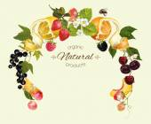 Vector berry and fruit round wreath frame Design for tea ice cream jam natural cosmetics candy and bakery with fruit filling health care products perfume Can be used as logo design