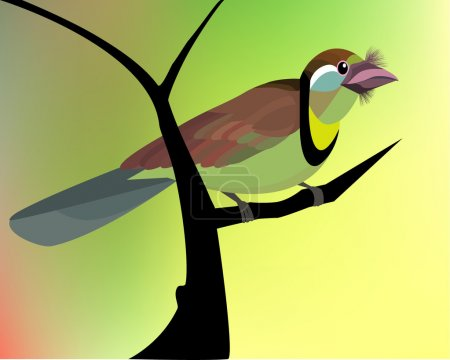 Illustration for Barbet  Sitting On The Tree Branch, Green Environment, All elements are in separate layers colors can be changed easily. - Royalty Free Image