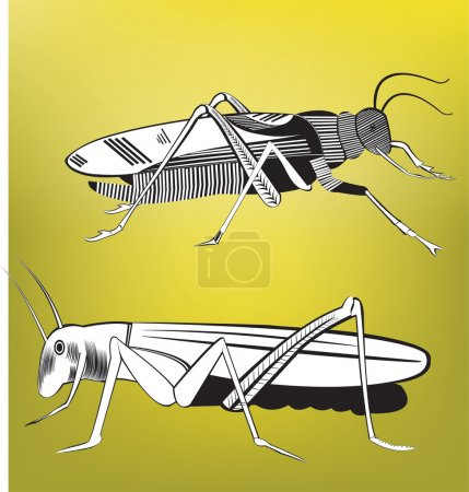 Illustration for Grasshopper is An Insect That can Leap About 20 Times as far  as The    Length of its body. All elements are in separate layers colors can be changed easily. - Royalty Free Image
