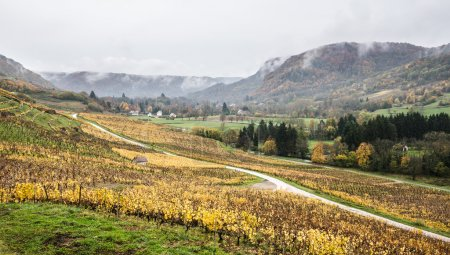 Picturesque view of vineyards
