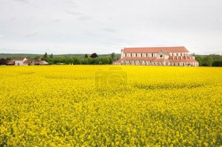 Abbey of Pontigny in the Oilseed rape fields