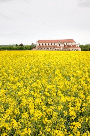 Photo pour Abbaye de Pontigny dans les champs de colza, Bourgogne, France - image libre de droit