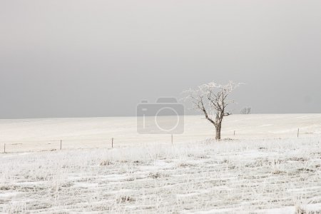 Bare tree on the fields