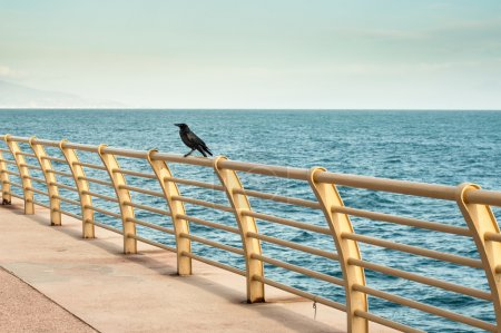 A raven on the yellow banister