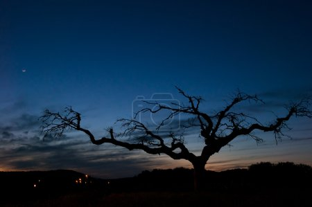 Bare tree at dusk