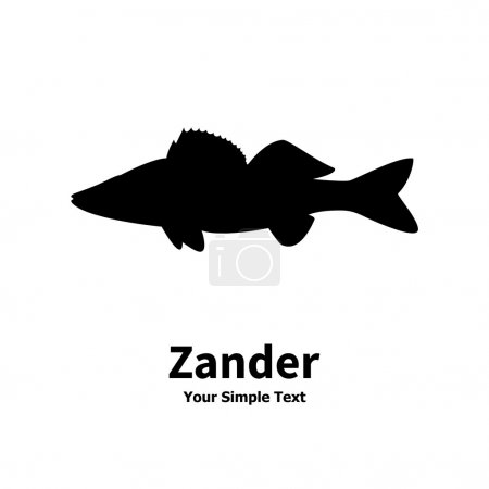 Vector illustration silhouette of zander. Isolated...