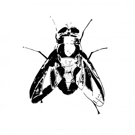 Illustration for Hand drawn fly insect vector scribble icon symbol illustration black lines - Royalty Free Image