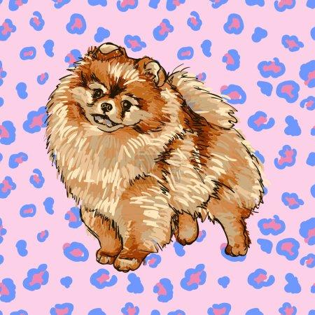 Puppy breed Pomeranian