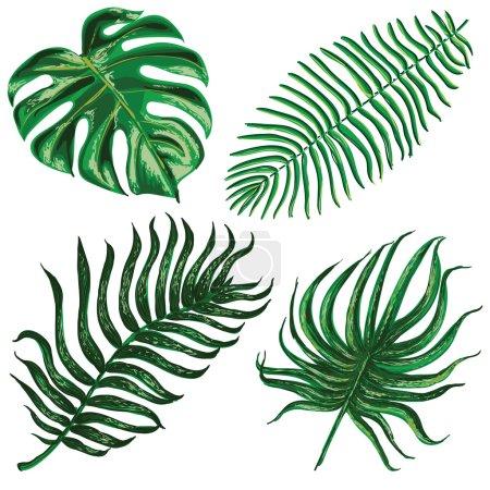 Photo pour Ensemble vectoriel avec feuilles exotiques tropicales - image libre de droit
