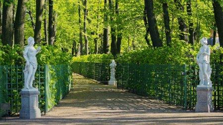 Photo pour Allées du jardin d'été avec sculptures. Parcs de Saint-Pétersbourg. - image libre de droit