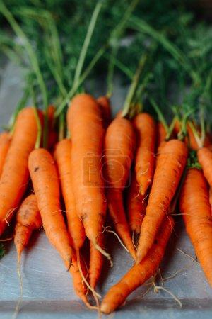Harvest carrots on  dark wood table background. freshly picked c