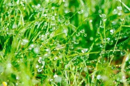 Dewdrop on grasses
