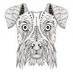 Schnauzer dog head zentangle stylized, vector, ill...