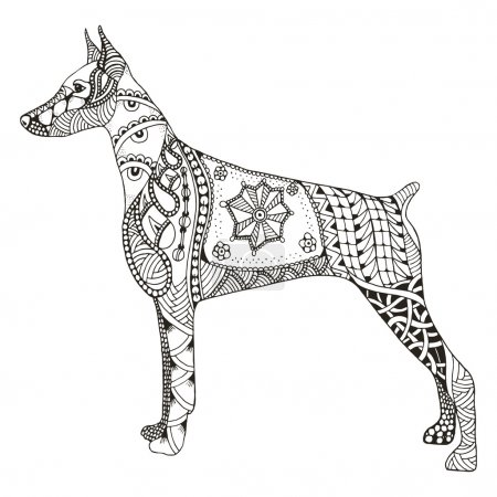 Doberman pinscher zentangle stylized, vector, illustration, free