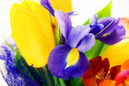 Photo for Beautiful colorful bouquet of fresh spring flowers: iris, freesia and tulip - Royalty Free Image