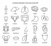 Organ line icons Human organ signs or human body parts symbols Tooth and brain line icons eye and liver symbols Vector illustration