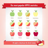Apples types infographic