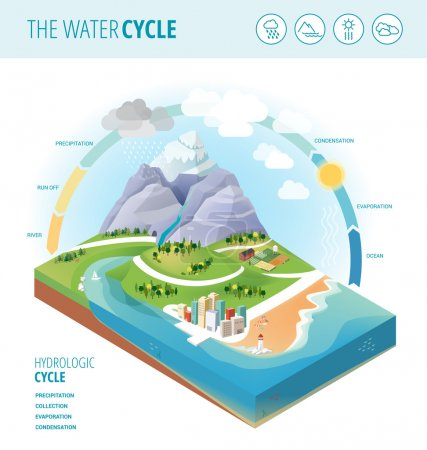 The water cycle diagram showing precipitation