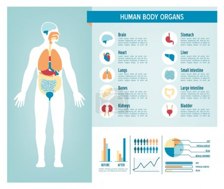 Illustration for Human body health care infographics, with medical icons, organs, charts, diagarms and copy space - Royalty Free Image