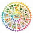 Vitamin vegan food sources and functions, rainbow ...