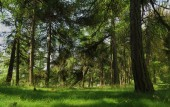 Tisa rocks with green forest