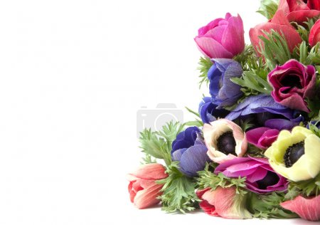 anemones on a white background