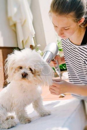 Little dries her dog