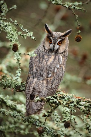 Owl sitting on the branch