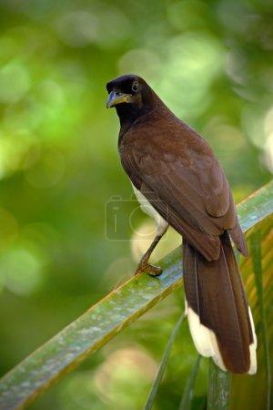 bird from green Costa Rica forest
