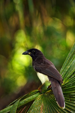 bird from green Belize forest