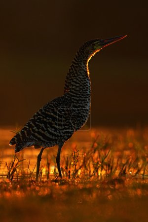 motteled bird with evening back light