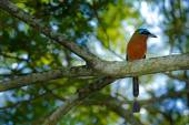exotic bird sitting on the branch