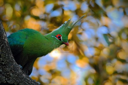 exotic green bird in the leaves