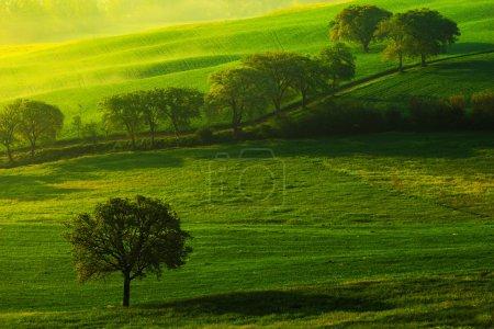 Photo pour Paysage verdoyant des prairies d'été, Été dans le champ, Vue idyllique sur les terres agricoles vallonnées en Toscane, Italie, Lumière du matin dans le champ - image libre de droit