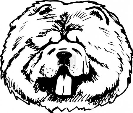 Graphic vector illustration of Chow Chow Dog. Isolated Vector Dog Portrait.