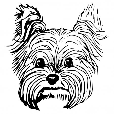 Graphic vector illustration of Yorkshire Terrier Dog. Isolated Vector Dog Illustration.