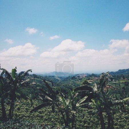 Photo pour Palmiers et ciel bleu à Bali - image libre de droit
