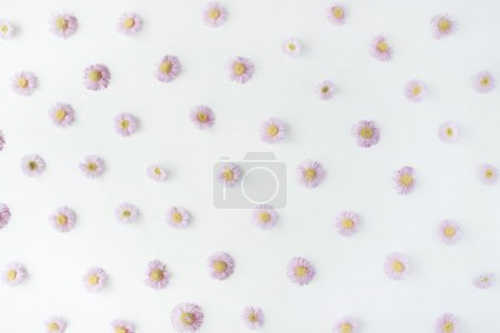 Photo for Chamomile pattern on white background. flat lay, top view - Royalty Free Image