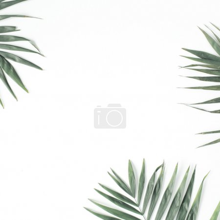 Green palm branches