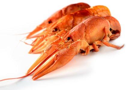Big boiled lobsters