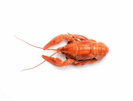 Photo for Boiled crayfish on white background - Royalty Free Image
