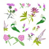 Set of drawing wild flowers