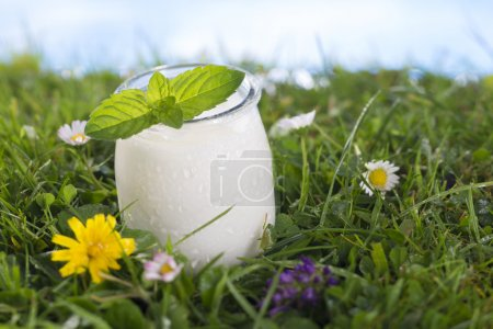 bowl of yoghurt with mint leaf on the grass