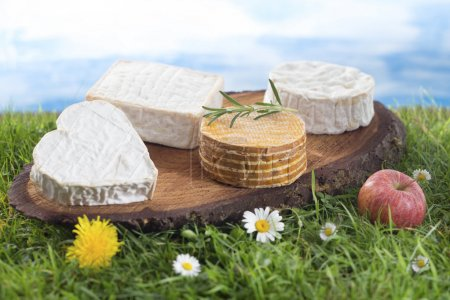 Speciaity cheese from Normandy France