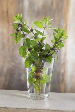 fresh Bunch mint in a glass of water