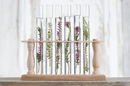solution of medicinal plants and flowers - Decorative Objects-pl