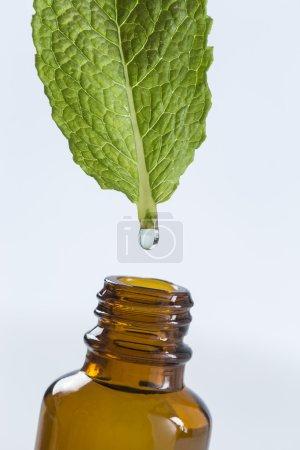 Symbol für die Gewinnung von ätherischem Pfefferminzöl