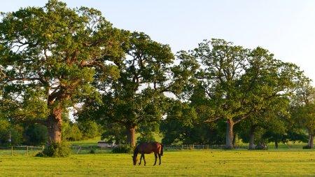 Horses Grazing in a Green Field